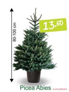 kerstboom in pot Picae Abies