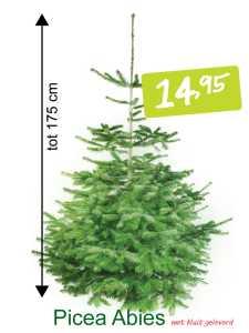 kerstboom Picae Abies met kluit