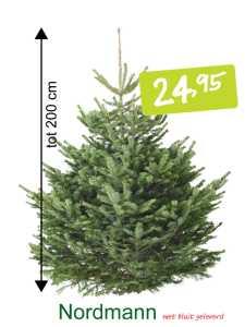 kerstboom met kluit Abies Normanniana